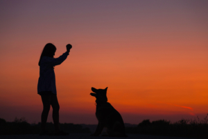 Dog Fitness Essentials That Can't Be Overlooked